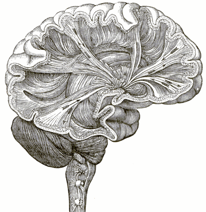 Throwback Thursday: Phrenology, Forks, And How To Live Forever