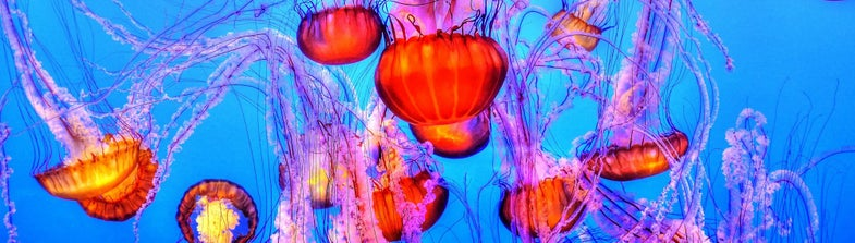 Are jellyfish going to take over the ocean?