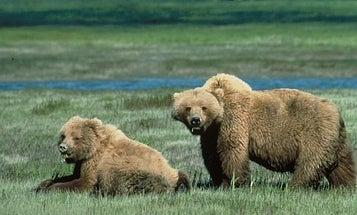 Beware the Bear?