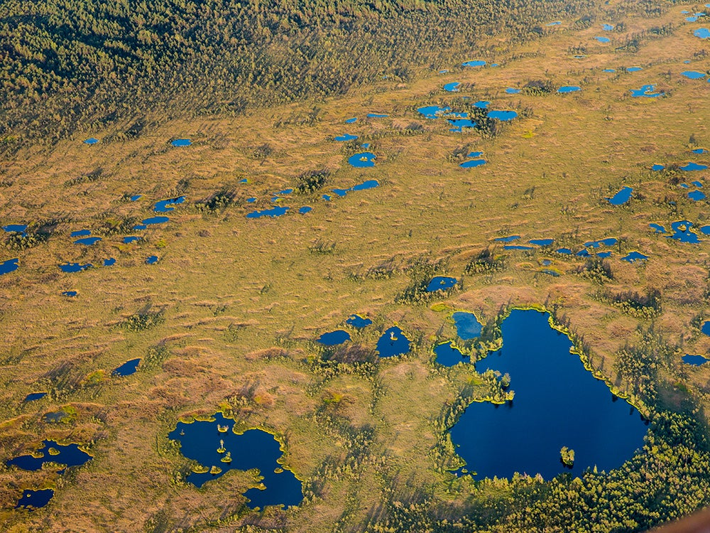 A bog in Estonia seen from above