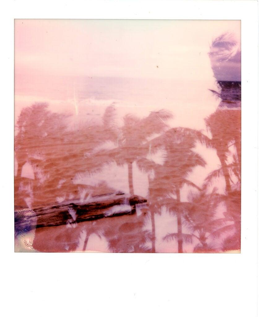 Polaroid Onestep+ sample palm trees
