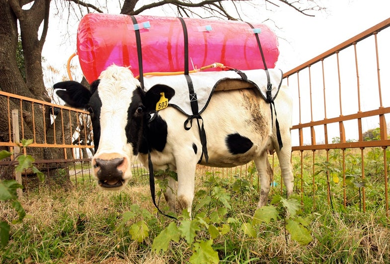 How To Make A More Environmentally Friendly Cow