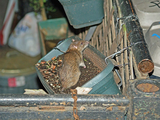 Overflowing Garbage And Rats: There's (Gonna Be) An App For That