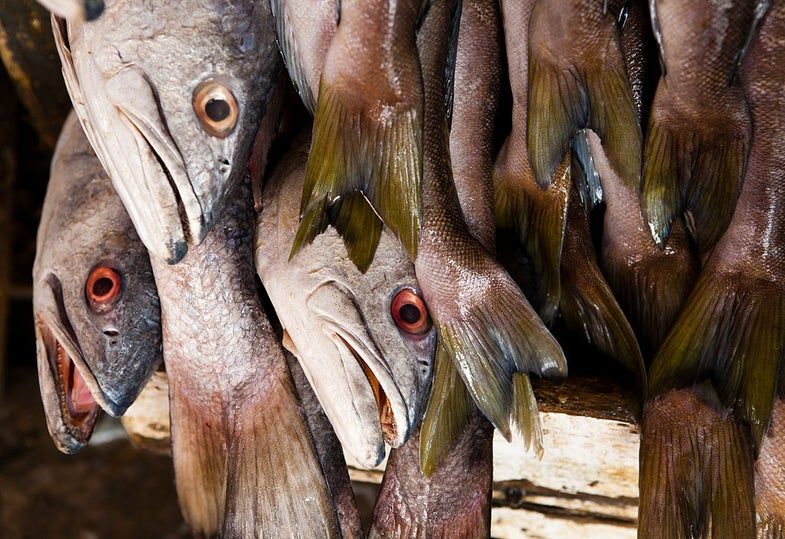 When You Smell Fish, You Think More Critically