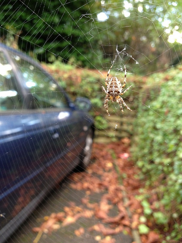 Your Car Might Contain Hidden Spider Stowaways
