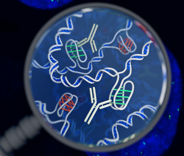 Scientists just discovered a strange new DNA shape lurking in human cells