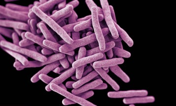Editing The Genes Of Superbugs To Turn Off Antibiotic Resistance