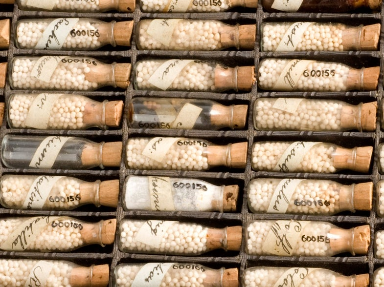 FDA May Start Regulating Homeopathy
