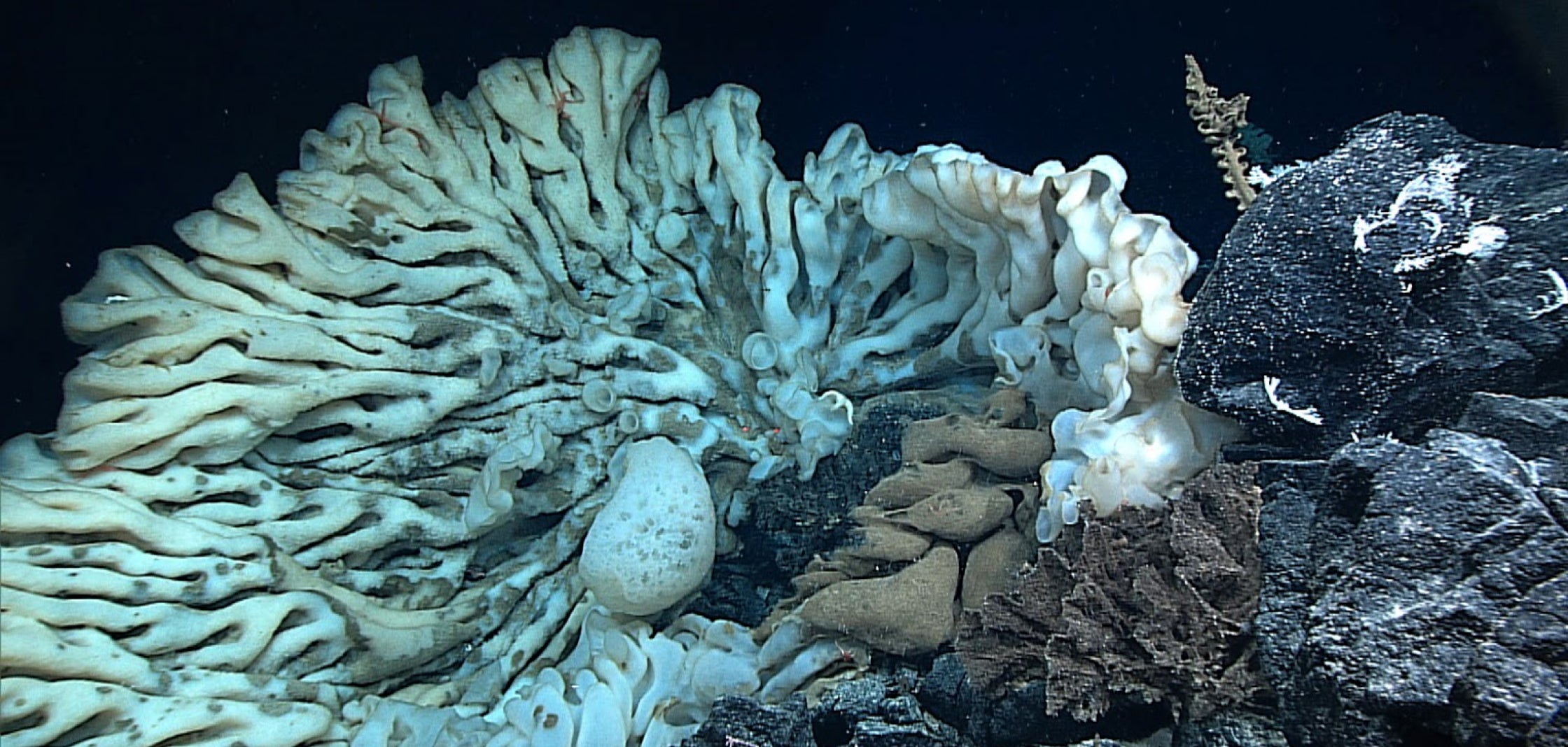 This Might Be The Largest Sponge In The World