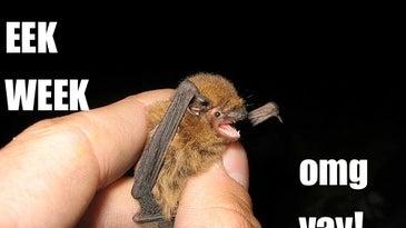 hand holding small bat