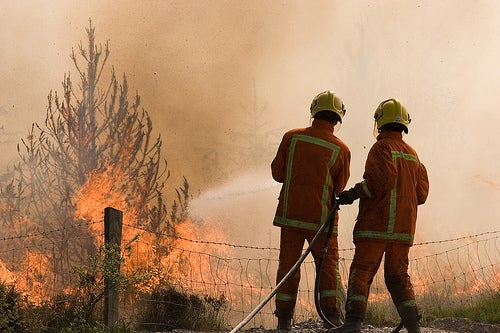 Forests to Serve as Fire Sentinels