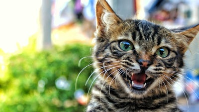Declawing cats is harmful. Do this instead.