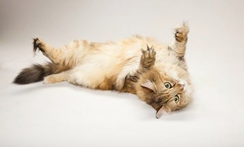 Kitty DNA Shows Cats Have Evolved To Learn From Treats