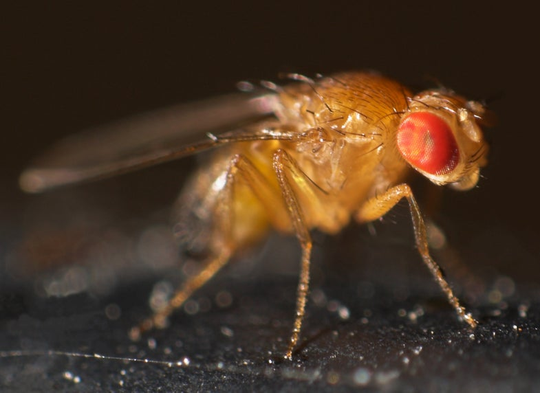 Frozen Fruit Flies Come Back to Life