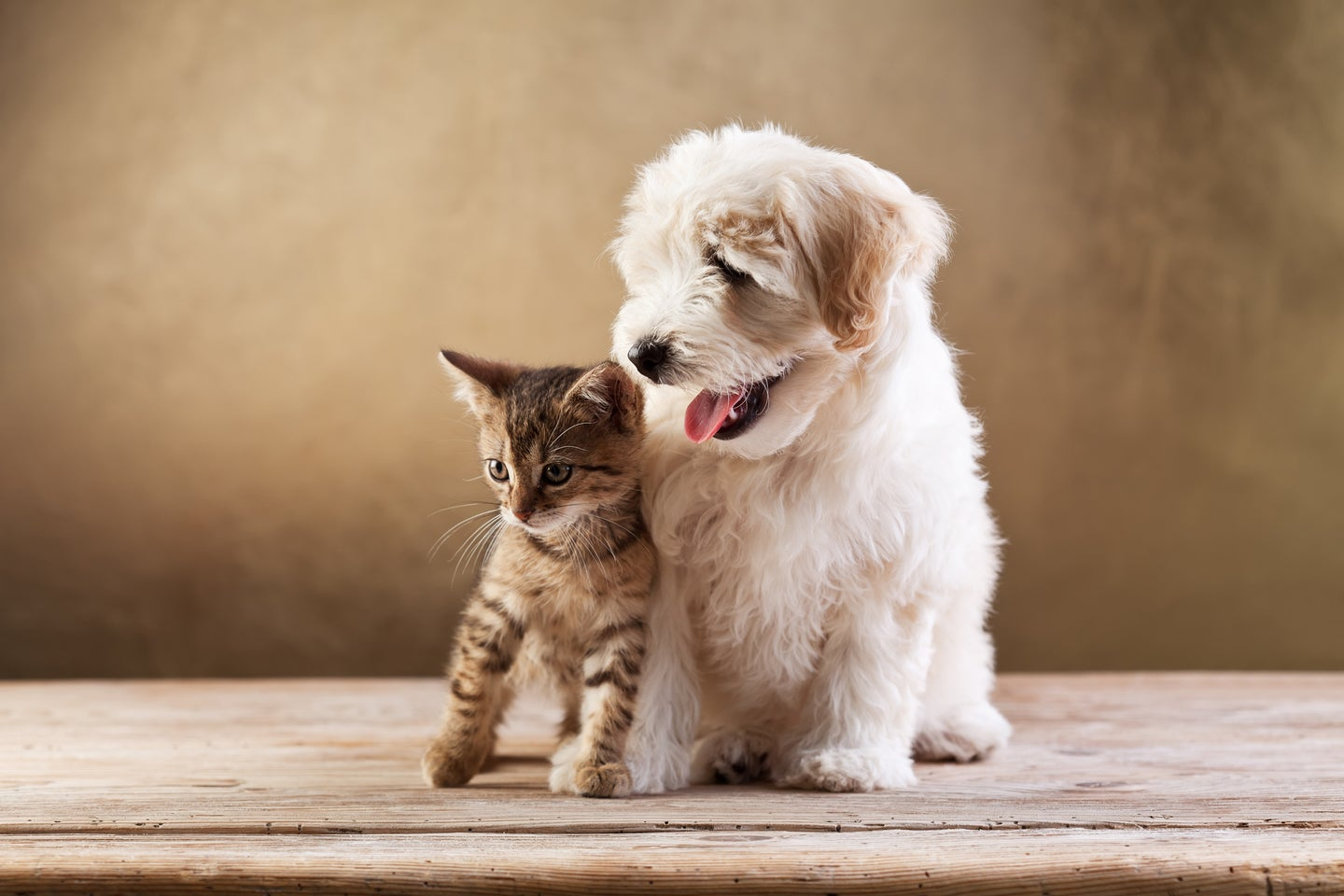 a kitten and a puppy