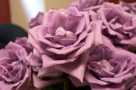 Suntory Creates Mythical Blue (Or, Um, Lavender-ish) Rose
