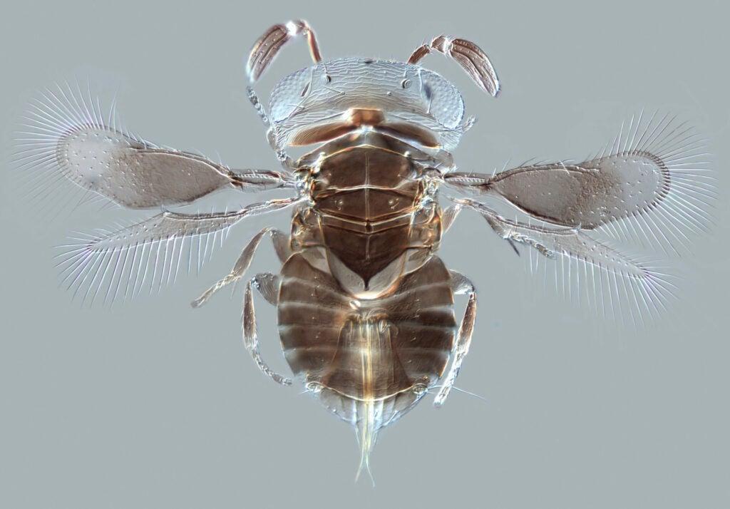 httpswww.popsci.comsitespopsci.comfilesimages201503parasitoid-wasp.jpg