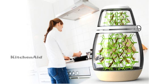 Raise Your Own Edible Bugs With This Decorative Kitchen Pod