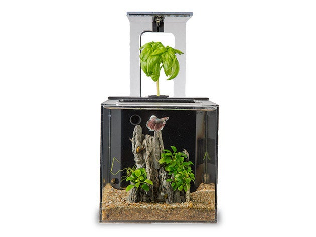 This $100 fish tank cleans itself without expensive filters
