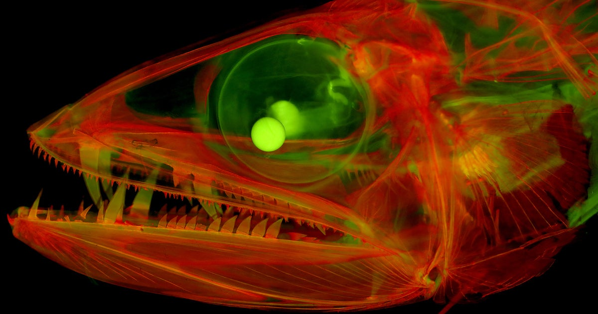 MEGAPIXELS: For a technicolor nightmare, see this fish in high definition