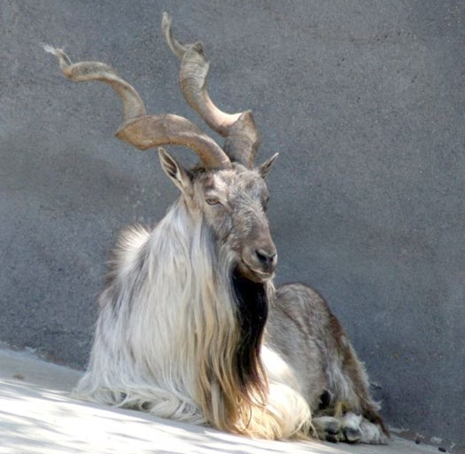 Mystery Animal Contest: Who Is This King Of The Beasts?