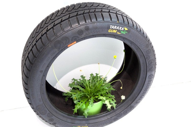 The rubber dandelion can be used to make tires.