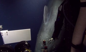 Underwater Robot Surprised By Sperm Whale [Video]