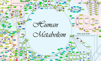 Researchers Create A 'Google Map' Of The Human Metabolism