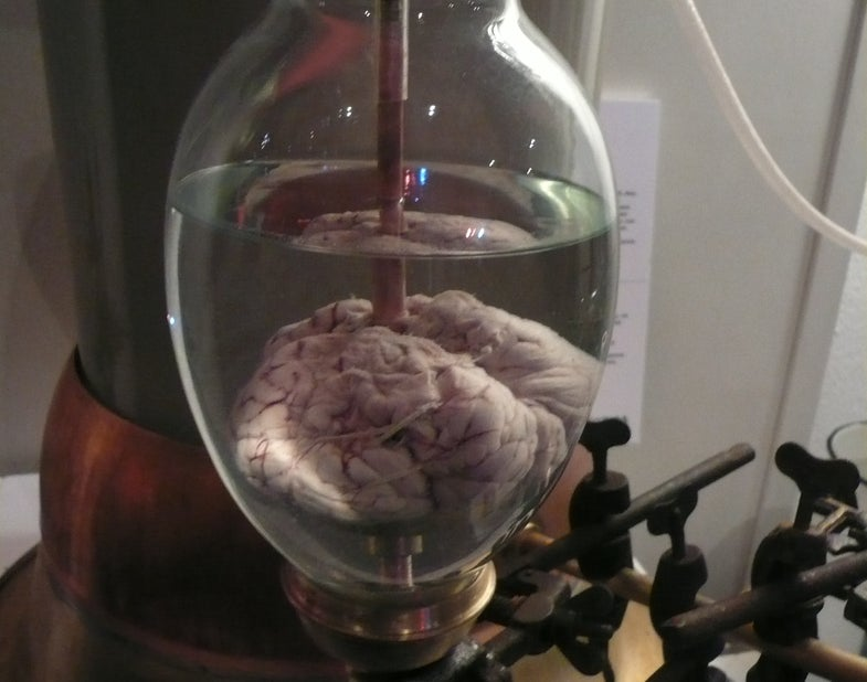 IARPA Wants Human-Like Robot Brains