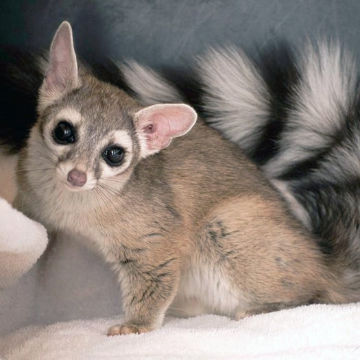 Mystery Animal Contest: Who Is This Wide-Eyed Flufftail?