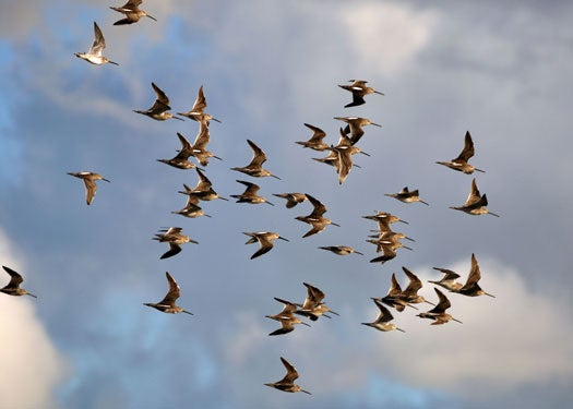 Birds May Use Quantum Mechanics To Migrate South