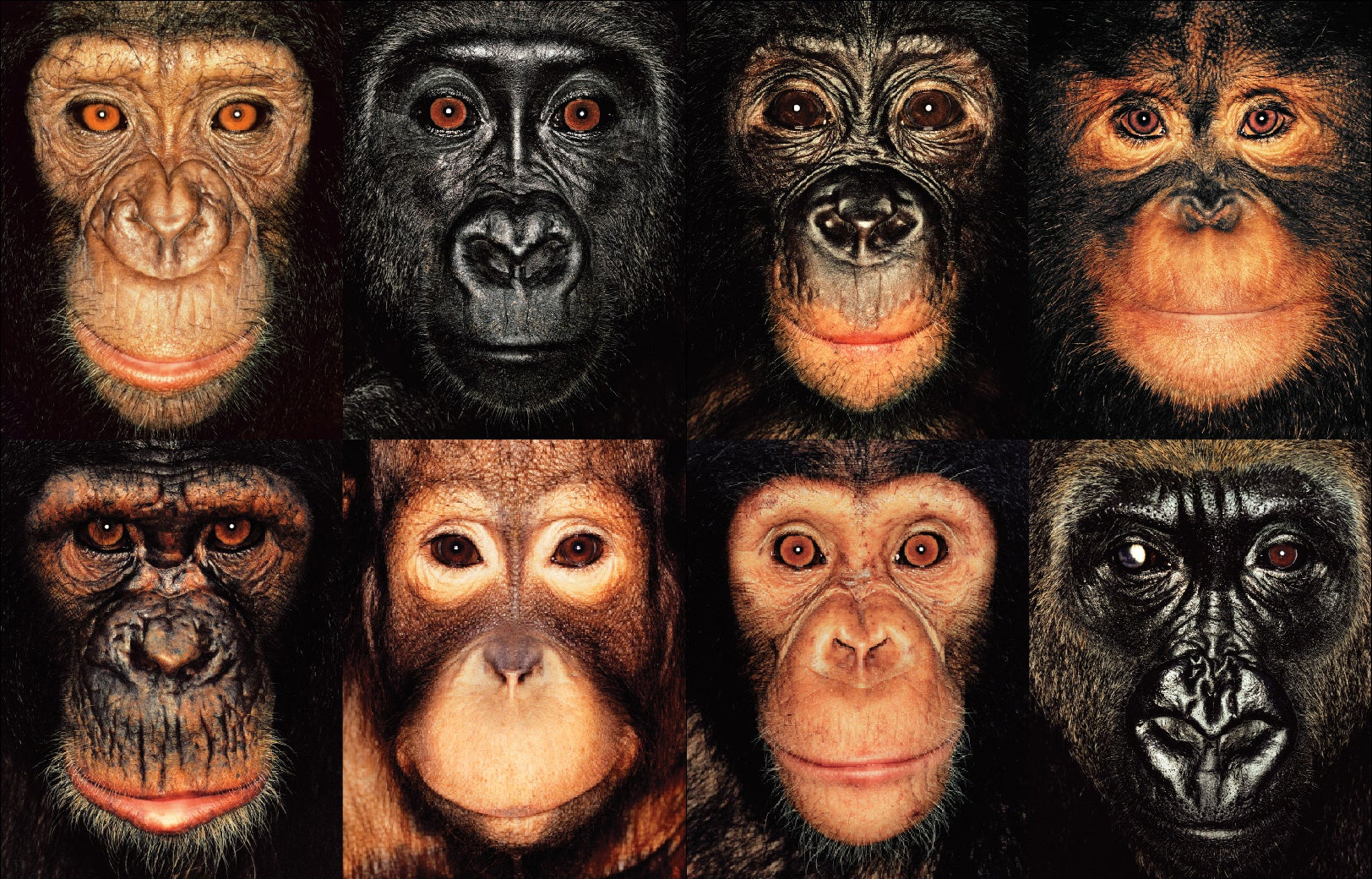 Should Animals Have The Same Rights As People?