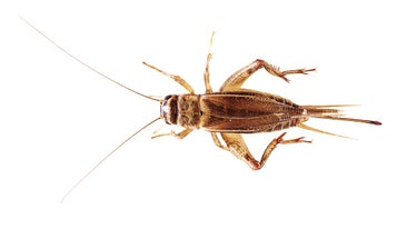 The Week In Numbers: Crunchy Crickets, Food Poison Twitter Bots, And A Whole Lotta Ice