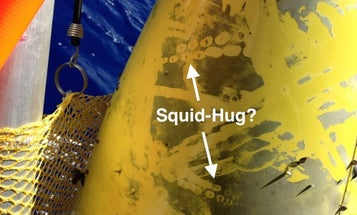 Squid And Robot Have Brief Underwater Affair