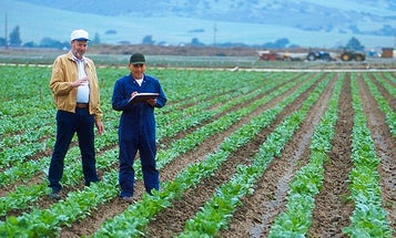 California Working On First Commercial Biofuel From Beets