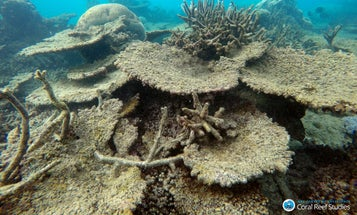 A record number of corals just died at the Great Barrier Reef