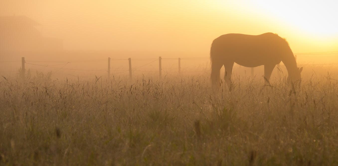 Scientists are trying to figure out where the heck horses came from