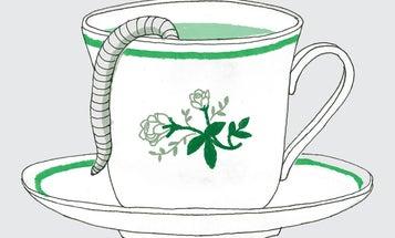 How to brew worm tea