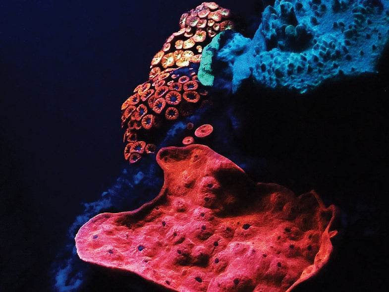 Corals Shine Light on Cancer Growth
