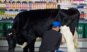 Why Does Organic Milk Have a Longer Shelf Life Than The Regular Kind?