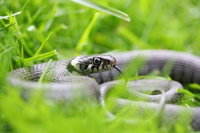 Eek Week: Snakes On the Brain