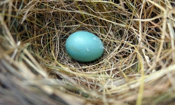 Laid Pretty: Five Bird Eggs That Are Beautiful Even Without Dye