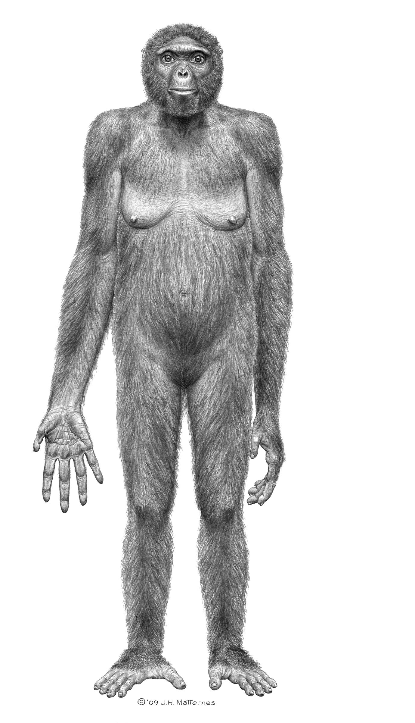 Hello, Ardi: New Oldest Humanoid Fossil A Million Years Older Than Lucy