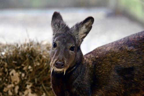 Virtual Hearts, Fanged Deer And Other Amazing Images Of The Week