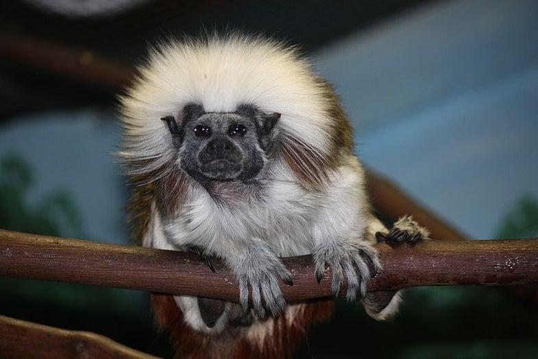 Harvard's Primate Research Lab To Close