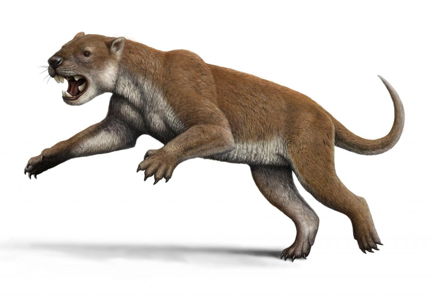 Elbow Joints Reveal How Marsupial Lions Disemboweled Dinner