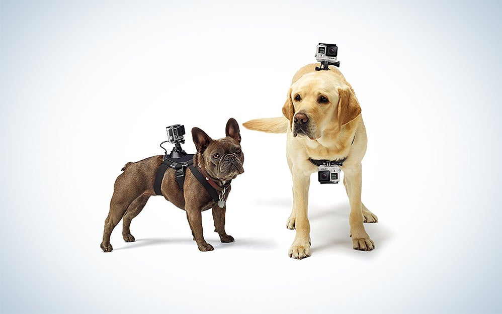Fetch GoPro Dog Harness