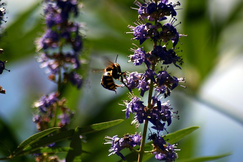 New Study: Flowers Attract Insects with Movement