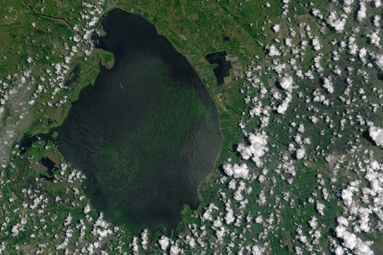 Lake Okeechobee Algal Bloom