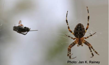 Artificial Spider Silk Might Be Better, and Easier, Than Milking Spiders